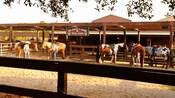 5 horses at Tri-Circle-D Ranch