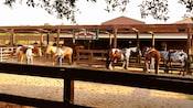 5 caballos en Tri-Circle-D Ranch