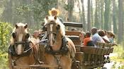 Decenas de Visitantes sonrientes viajan en la parte de atrás de una carreta al estilo del Viejo Oeste, tirada por 2caballos