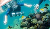 2 scuba divers come upon a school of angelfish