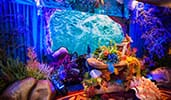 Colorful oceanic themed decorations