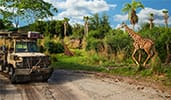 A safari vehicle passes by a giraffe in the Kilimanjaro Safaris savanna