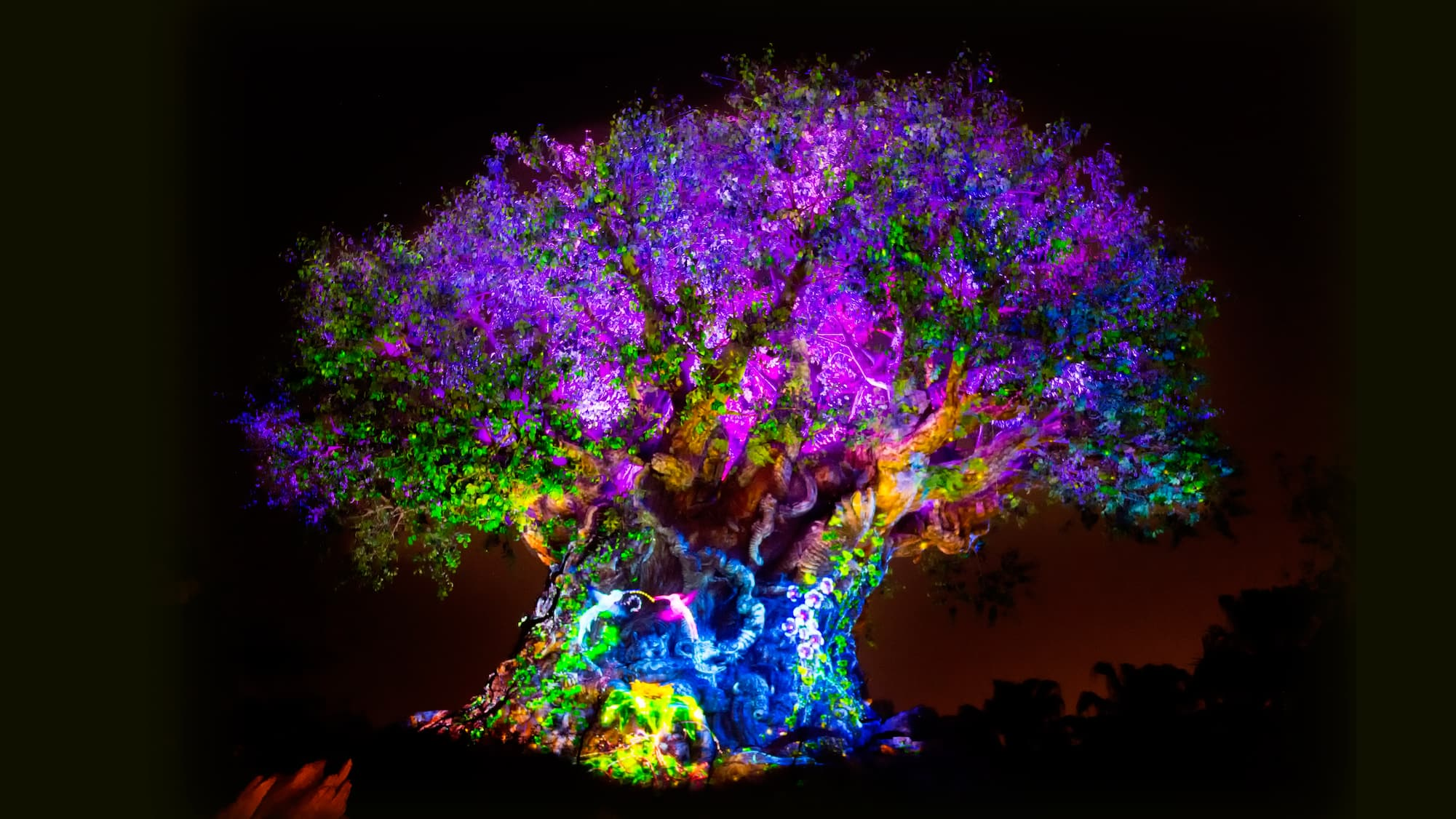The Tree Of Life Awakens At Nighttime With Vibrant Lights Animal Projections And Special Effects