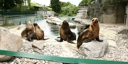Seals lounge on rocks in a zoo's aquatic section