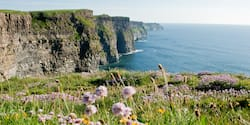 Flowers bloom among the grass on a top of seaside cliffs