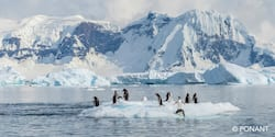 A waddle of penguins on a small iceberg in a strait by the continent of Antarctica