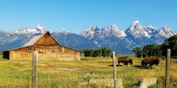 Bison graze in a field next to a wooden barn surrounded by mountain peaks