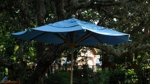 Una sombrilla debajo de árboles