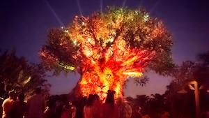 Una multitud de Visitantes reunidos en torno a Tree of Life mientras ilumina el cielo nocturno