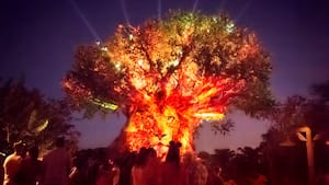 A crowd of Guests gathered around the Tree of Life as it lights up the night sky