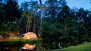 Surrounded by trees, a tent at Disney's Fort Wilderness Campsite is illuminated under the evening stars