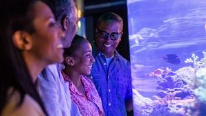 Un hombre y su esposa se ríen juntos mientras contemplan los hábitats submarinos de Future World, en Epcot