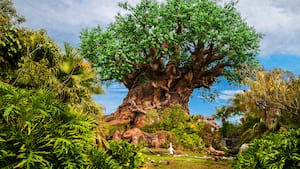 The Tree of Life stands tall amid lush greenery at the center of Disney's Animal Kingdom theme park