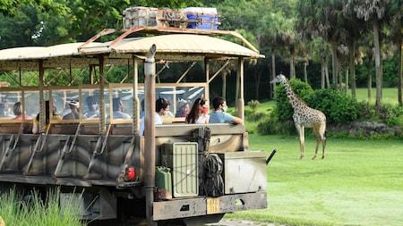 Visitantes observan a una jirafa en la sabana desde un vehículo en la atracción Kilimanjaro Safaris