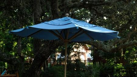An umbrella under trees
