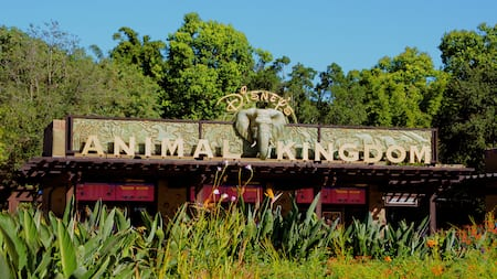 Trees stand tall behind the Disney's Animal Kingdom theme park main ticket booth