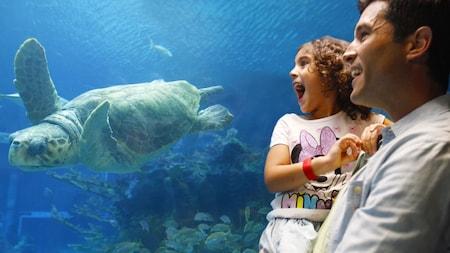 Un padre y su hija observan una gran tortuga marina nadando en el acuario