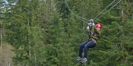 An Adventurer ziplines through the treetops of a forest of large pine trees