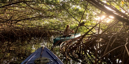 The bow of a kayak followis a single-person kayak through a thick mangrove forest