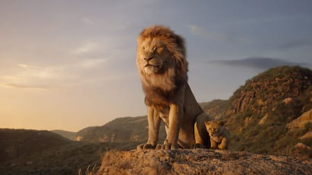 A lion sits at the edge of a cliff, staring out into the wild
