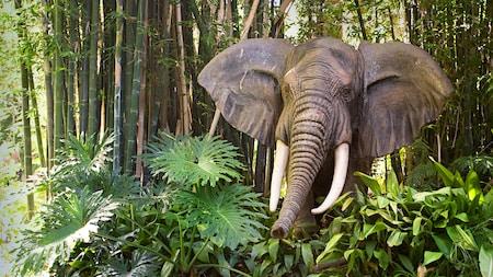 Un elefante barritando en la atracción Jungle Cruise