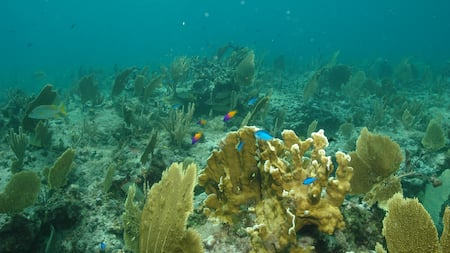 Tropical fish swimming among coral reef