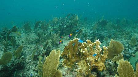 Des poissons tropicaux nagent dans le récif corallien.