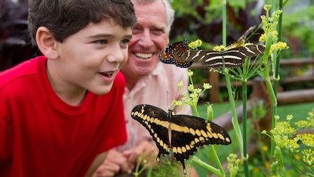 Un garçon et son grand-père s'émerveillent devant des papillons aux ailes zébrées posés sur une plante à fleurs