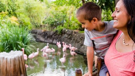 Une mère tient son jeune fils sur la rive d'un lac et lui montre une volée de flamants