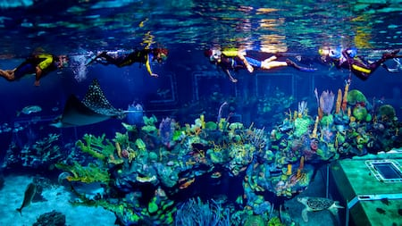 Stingrays, sea turtles and other creatures swimming beneath a series of scuba divers at the surface