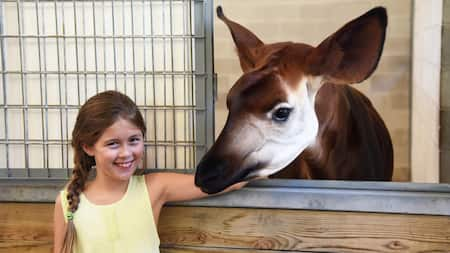 A young female Guests smiling while happily posing beside an Okapi during the Sense of Africa tour