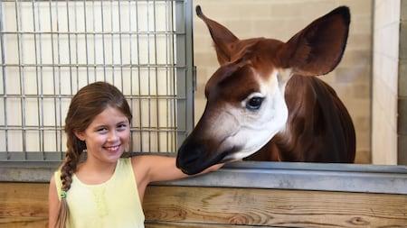 Una Visitante joven sonríe mientras posa felizmente junto a un okapi durante la excursión Sense of Africa
