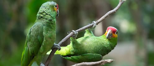 Two parrots perched on a tree branch
