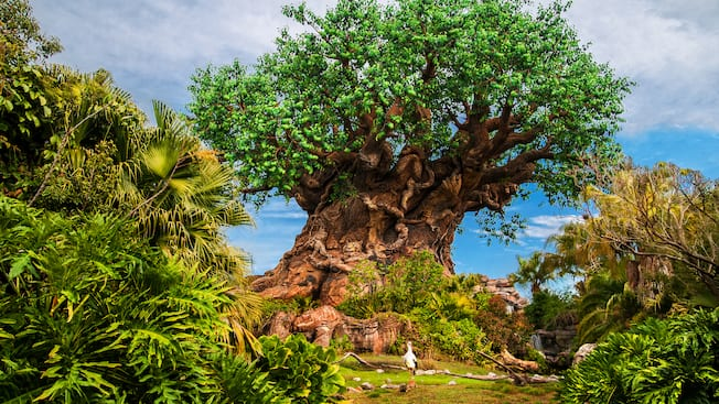 The Tree of Life stands tall above the lush foliage on Discovery Island