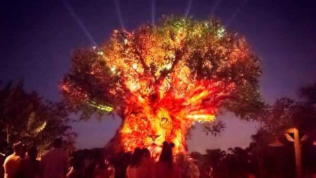 https://cdn1.parksmedia.wdprapps.disney.com/resize/mwImage/1/630/354/75/dam/disney-world/events-tours/animal-kingdom/animal-kingdom-after-hours/tree-of-life-show-lion-night-16x9.jpg?1569256103956