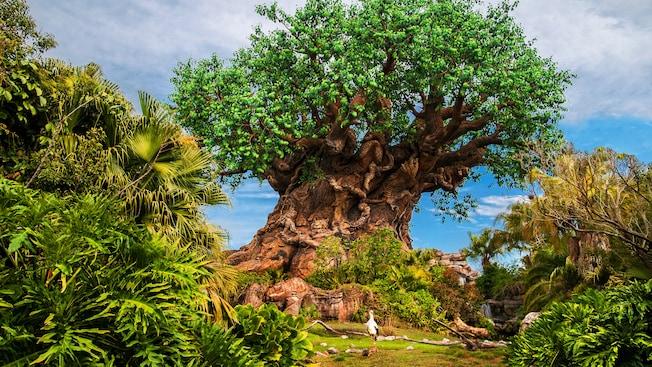Una garza posada frente al Tree of Life