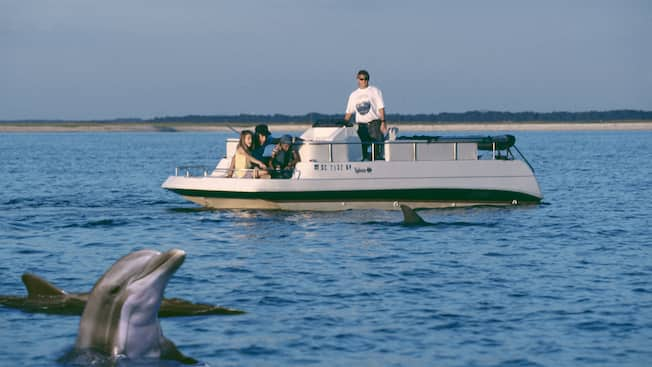 From a small motor boat, 2 men and a boy and girl watch dolphins in the water