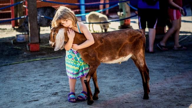 Una niña abraza a una cabra en el zoológico interactivo Affection Section
