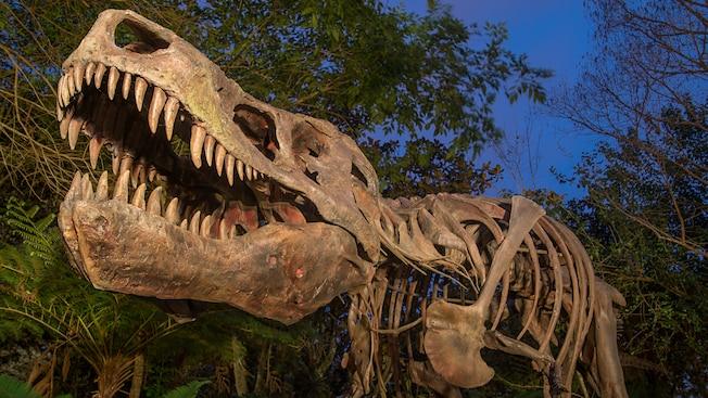 Le squelette d'un tyrannosaure rex éclairé la nuit à DinoLandU.S.A.