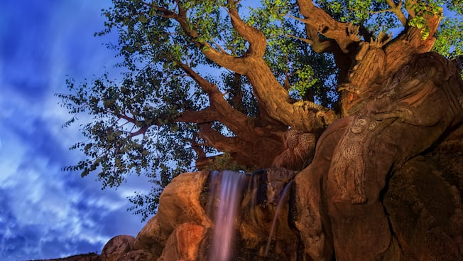 The Tree of Life visto desde Discovery Island Trails en el parque temático Disney's Animal Kingdom