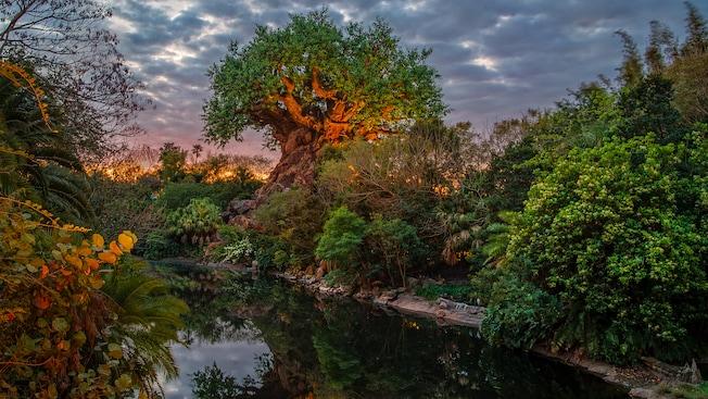 A Tree of Life, nas margens do Discovery River em um dia nublado ao amanhecer