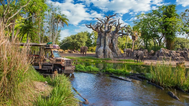A safari bus in a river bed near a herd of elephants around a large, bare tree