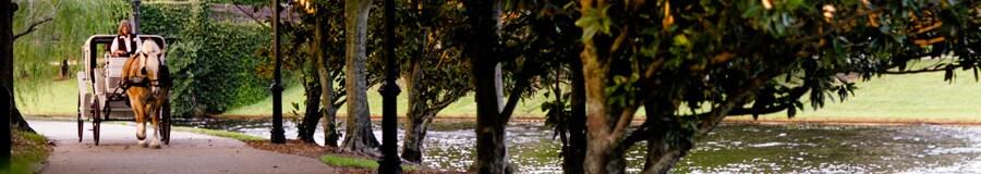 Une calèche tirée par un cheval sur un chemin près de la rivière Sassagoula
