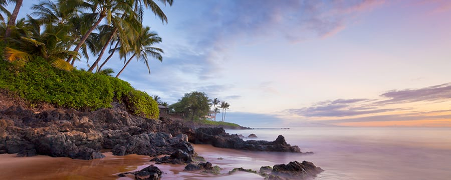 A rocky shoreline with palm trees