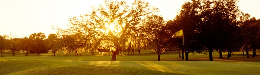 Large trees on a golf course