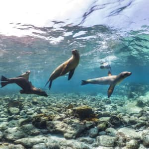 A group of seals swimming underwater